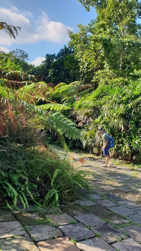 149811.jpg - 【宜蘭.冬山】免費景點推薦。仁山植物園寵物友善空間。猴子大肆出沒超可愛