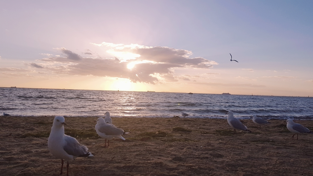 20190213_194807.jpg - 【澳洲.墨爾本】2019免費景點。Brighton Beach Bath Boxes 海邊彩色小屋