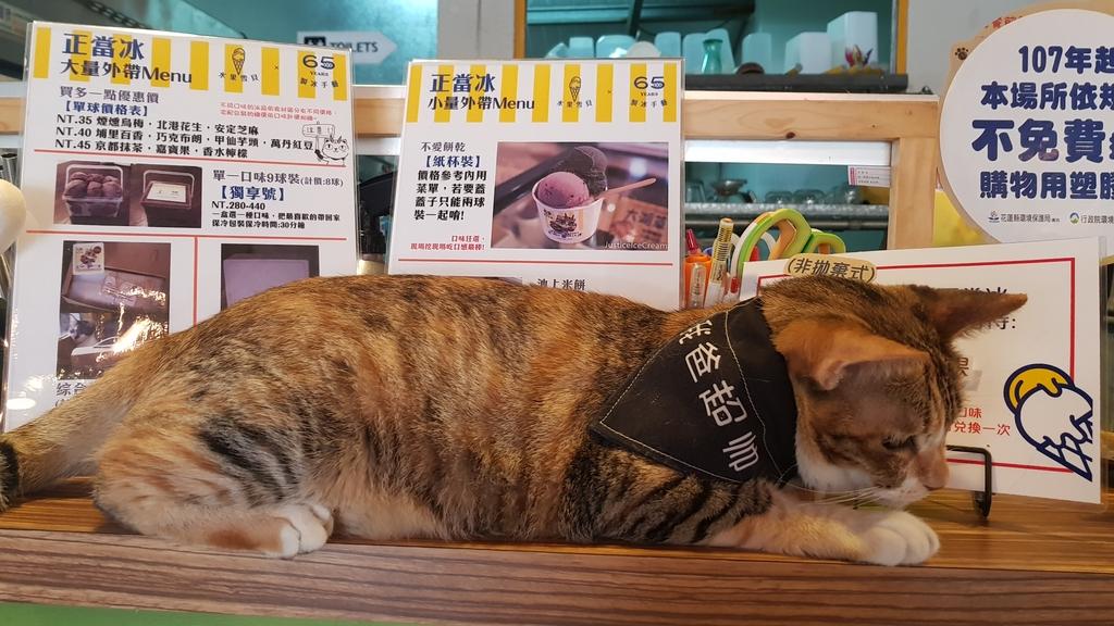 20180813_130644.jpg - 【花蓮】夏天就是要吃冰。正當冰貓咪中途友善寵物冰店