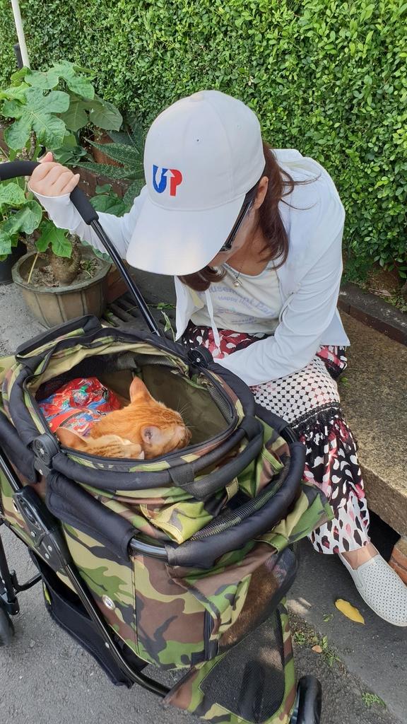 147011.jpg - 【台北.永和】沛德奧PETTRO寵物推車。貓狗都適合。輪子超好推簡易收納超輕骨架