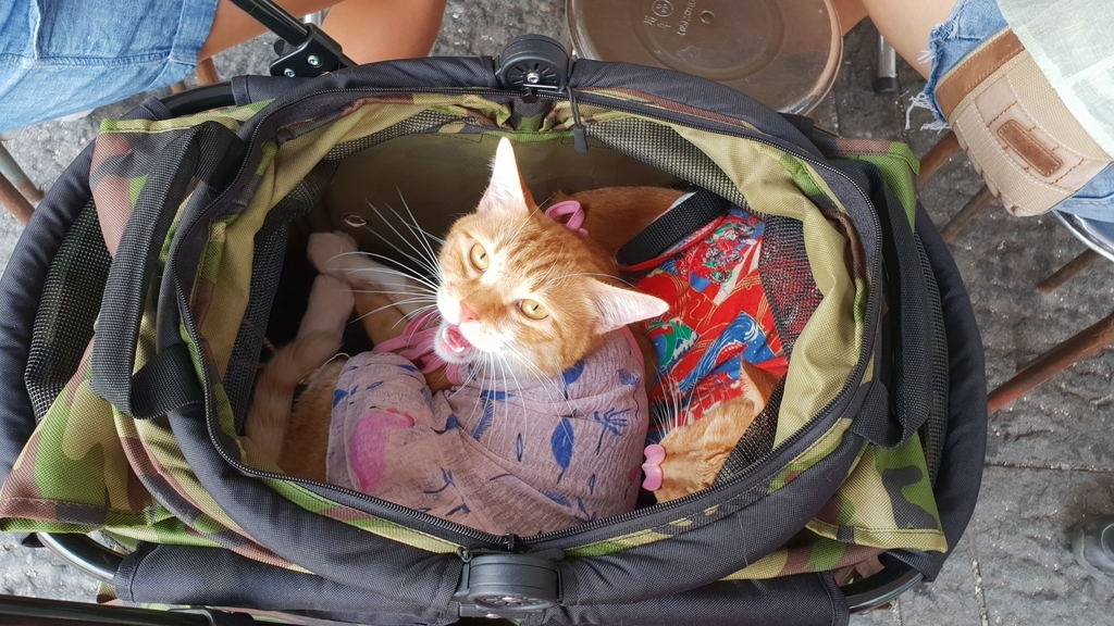 147015.jpg - 【台北.永和】沛德奧PETTRO寵物推車。貓狗都適合。輪子超好推簡易收納超輕骨架