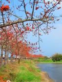 【台南】林初埤。季節限定美麗的木棉花道:IMG_9371.JPG