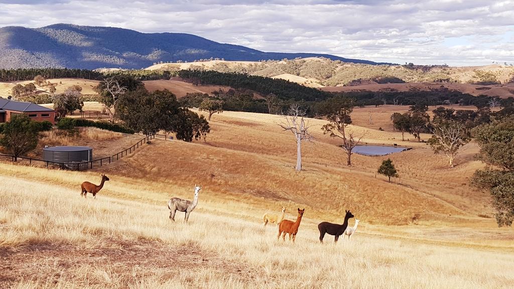 【澳洲.墨爾本】2019住宿推薦。Wirraway Farm Stay超美麗農場景致:20190211_182613.jpg