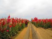 【台南】學甲蜀葵花盛開。季節限定版美麗花景:IMG_9682.JPG