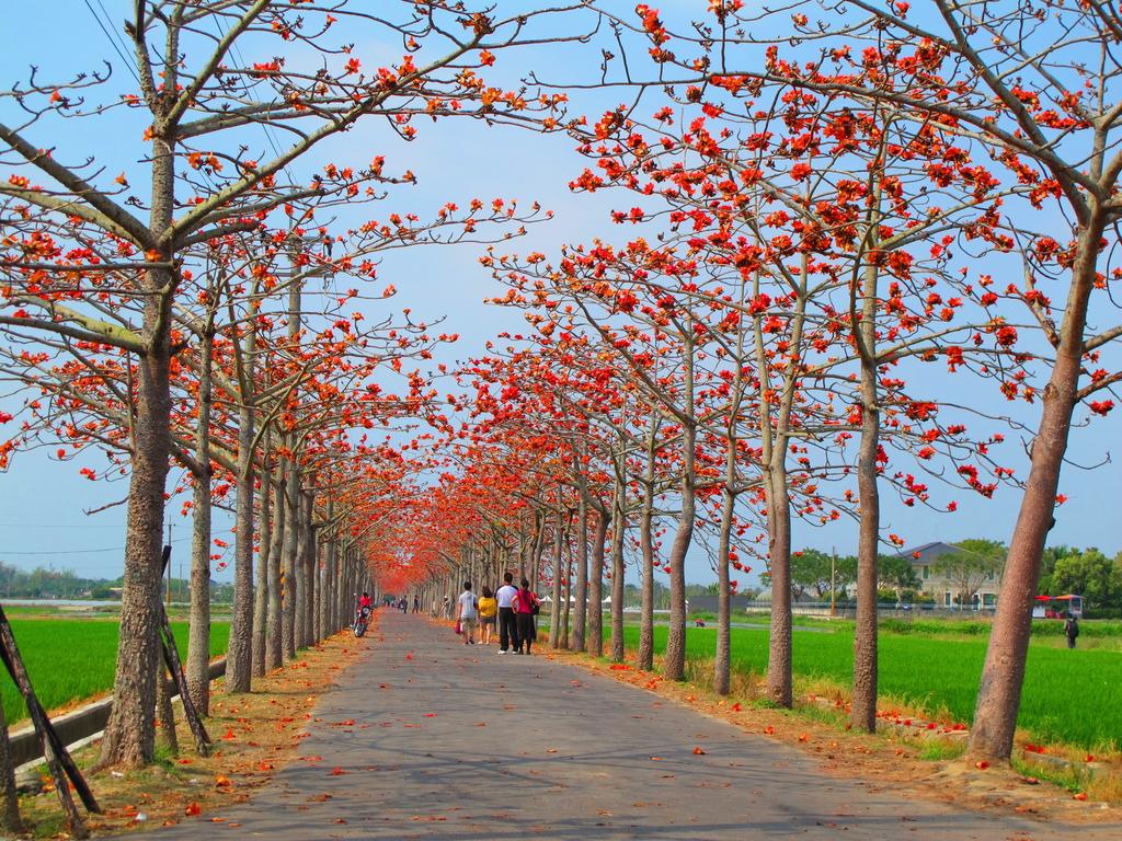 【台南】林初埤。季節限定美麗的木棉花道:IMG_9442.JPG