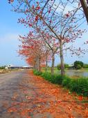 【台南】林初埤。季節限定美麗的木棉花道:IMG_9382.JPG