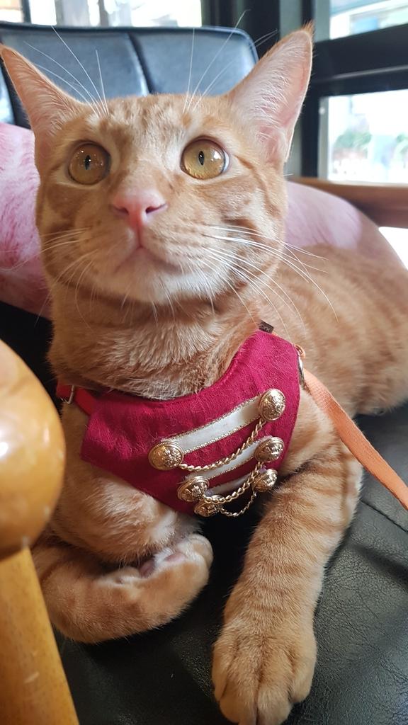 20180712_161159.jpg - 【台北.公館】彼克蕾咖啡義大利麵下午茶專賣店。寵物友善餐廳上牽繩可落地