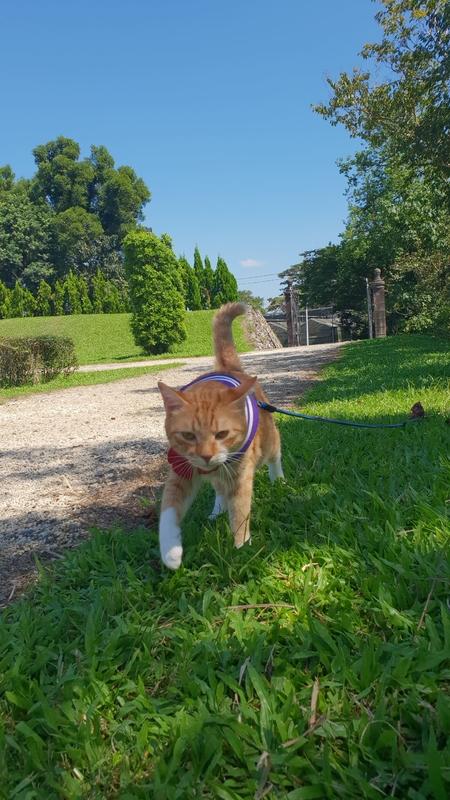 149787.jpg - 【宜蘭.冬山】免費景點推薦。仁山植物園寵物友善空間。猴子大肆出沒超可愛