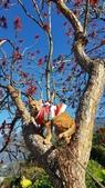 【南投.信義】1月季節限定美景。外坪頂蔡家秘境梅園。絕美水池倒影:128179.jpg