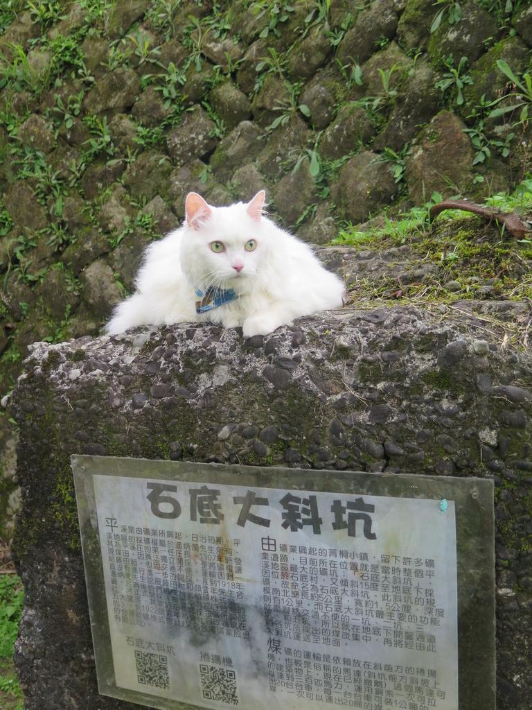 IMG_1614.JPG - 【台北.平溪】平溪小祕境。偶像劇妹妹拍攝地。石底大斜坑拍寵物寫真球球篇