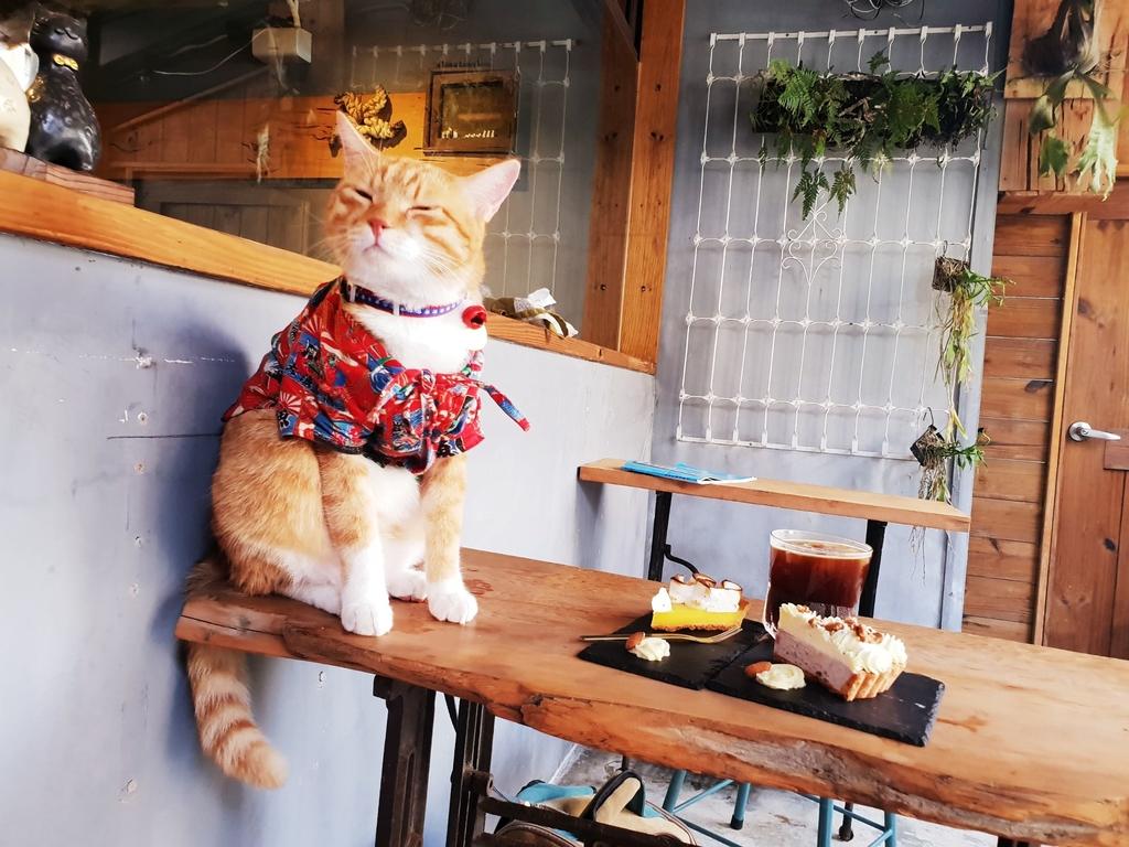 138801.jpg - 【花蓮.市區】下午茶推薦。唔子咖啡。有兩隻店貓。咖啡好喝甜點好吃不甜膩超推