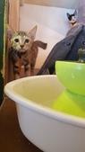 【花蓮】夏天就是要吃冰。正當冰貓咪中途友善寵物冰店:20180813_130048.jpg