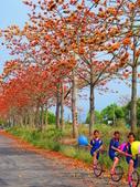 【台南】林初埤。季節限定美麗的木棉花道:IMG_9390.JPG