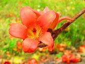 【台南】林初埤。季節限定美麗的木棉花道:IMG_9398.JPG
