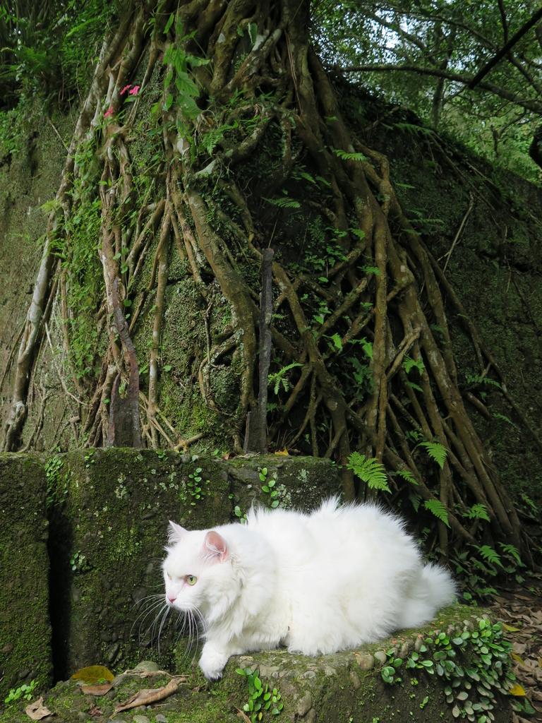 IMG_1768.JPG - 【台北.平溪】平溪小祕境。偶像劇妹妹拍攝地。石底大斜坑拍寵物寫真球球篇
