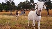 【澳洲.墨爾本】2019住宿推薦。Wirraway Farm Stay超美麗農場景致:70187221_3102174996520227_5567362627434184704_o.jpg
