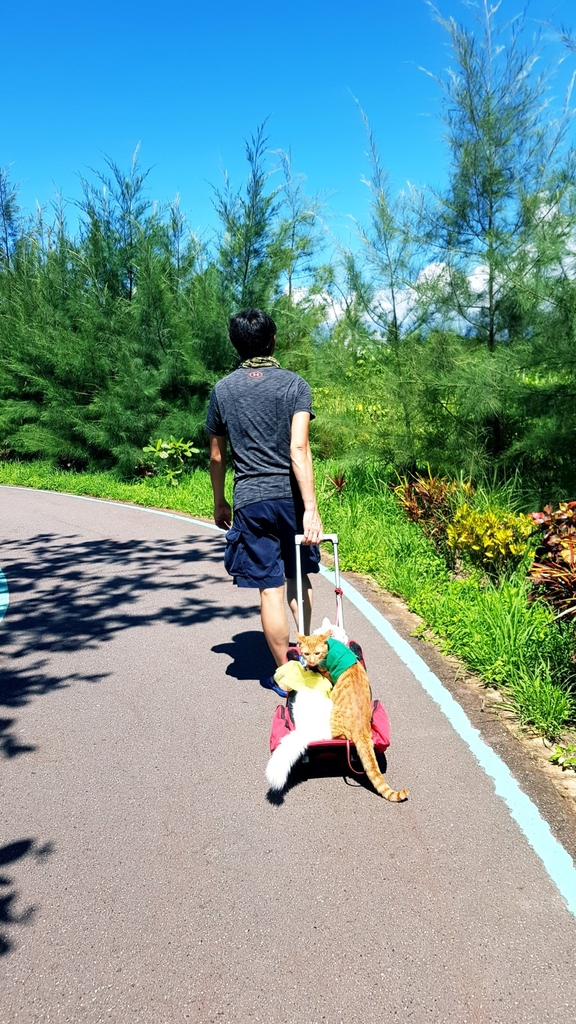 36.jpg - 【台東】旅行貓日記全台最美公園。台東森林公園琵琶湖外拍最佳地點