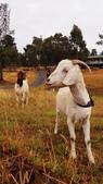【澳洲.墨爾本】2019住宿推薦。Wirraway Farm Stay超美麗農場景致:70590946_3102175189853541_2994644691342852096_n.jpg