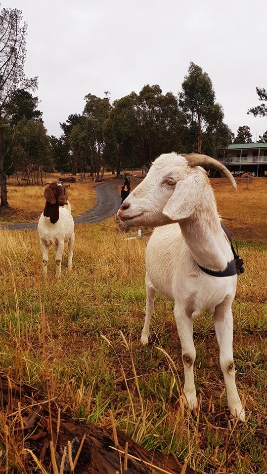 70590946_3102175189853541_2994644691342852096_n.jpg - 【澳洲.墨爾本】2019住宿推薦。Wirraway Farm Stay超美麗農場景致