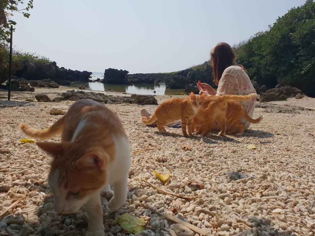 241271.jpg - 【屏東.恆春】小峇里島岩。記得帶肉泥。可以享受被貓咪包圍的感覺。這裡夕陽超美麗