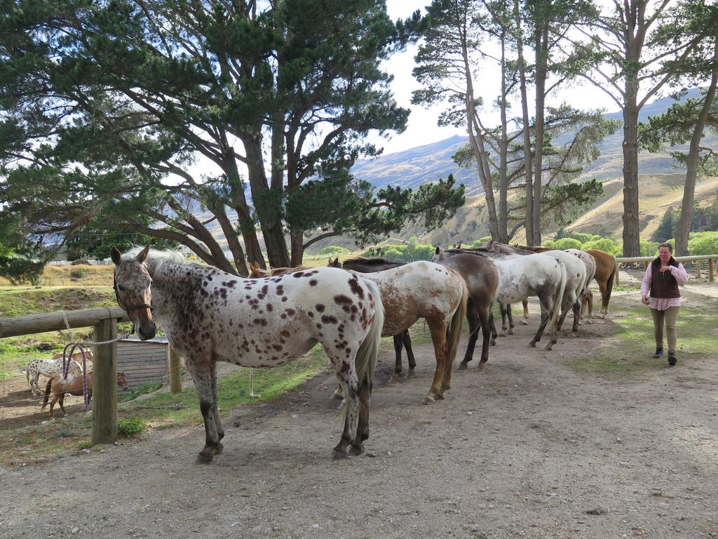 IMG_6509.JPG - 【紐西蘭.南島】2017騎馬體驗。Wanaka。MTCARDRONA STATION教練超美