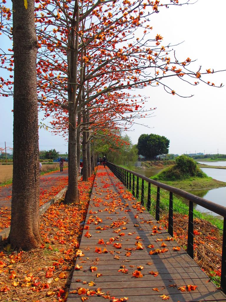 【台南】林初埤。季節限定美麗的木棉花道:IMG_9428.JPG
