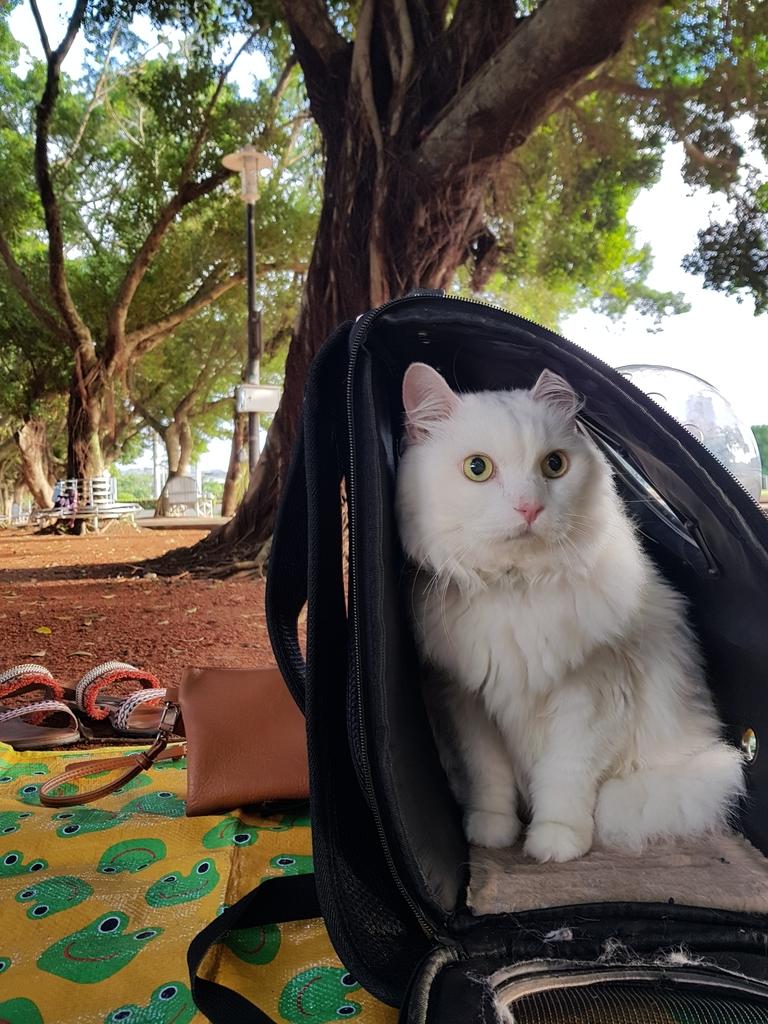 20171121_153842.jpg - 【寵物用品】貓狗外出太空背包兩款推薦(含拉桿款)。南洋峇里spa撰寫