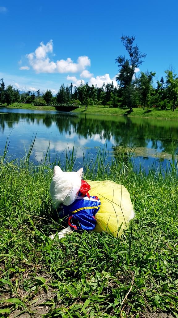 20180627_094730.jpg - 【台東】旅行貓日記全台最美公園。台東森林公園琵琶湖外拍最佳地點