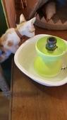 【花蓮】夏天就是要吃冰。正當冰貓咪中途友善寵物冰店:20180813_130014.jpg
