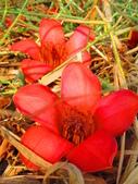 【台南】林初埤。季節限定美麗的木棉花道:IMG_9372.JPG