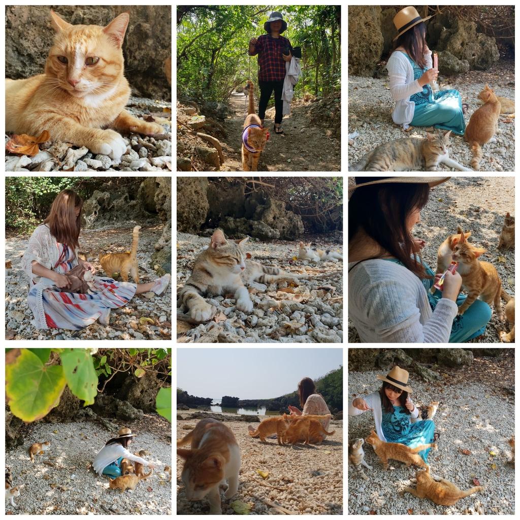 241259.jpg - 【屏東.恆春】小峇里島岩。記得帶肉泥。可以享受被貓咪包圍的感覺。這裡夕陽超美麗