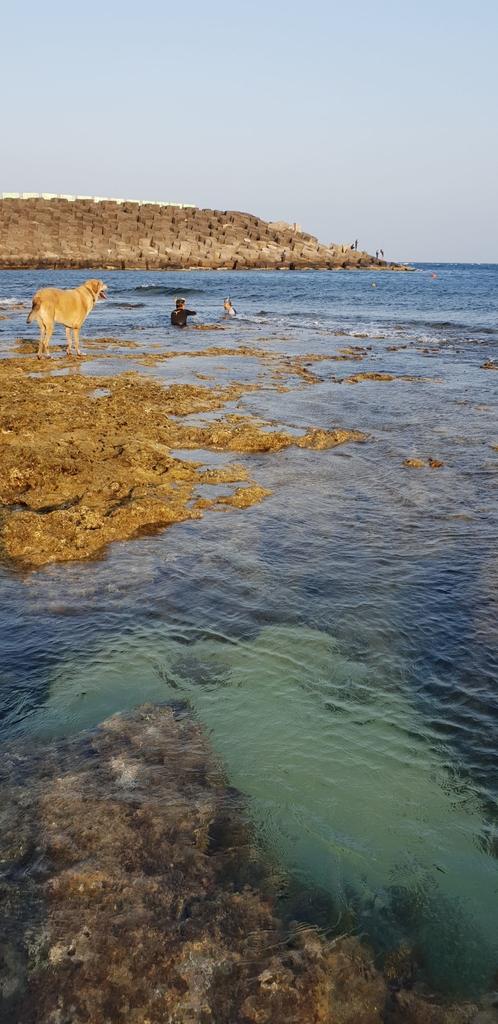 241299.jpg - 【屏東.恆春】小峇里島岩。記得帶肉泥。可以享受被貓咪包圍的感覺。這裡夕陽超美麗