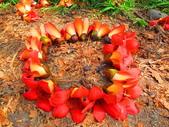 【台南】林初埤。季節限定美麗的木棉花道:IMG_9383.JPG