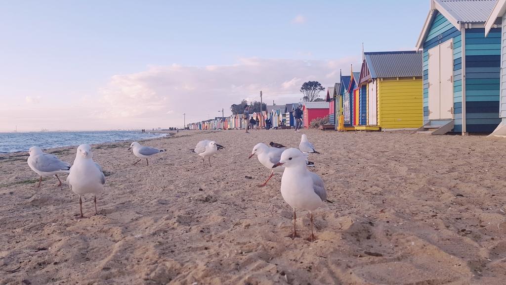 20190213_194757.jpg - 【澳洲.墨爾本】2019免費景點。Brighton Beach Bath Boxes 海邊彩色小屋