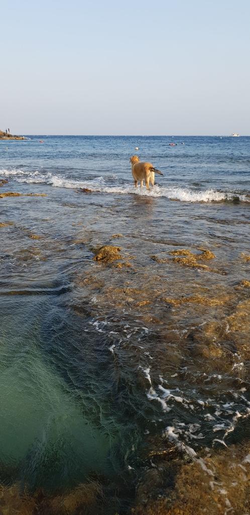 241300.jpg - 【屏東.恆春】小峇里島岩。記得帶肉泥。可以享受被貓咪包圍的感覺。這裡夕陽超美麗