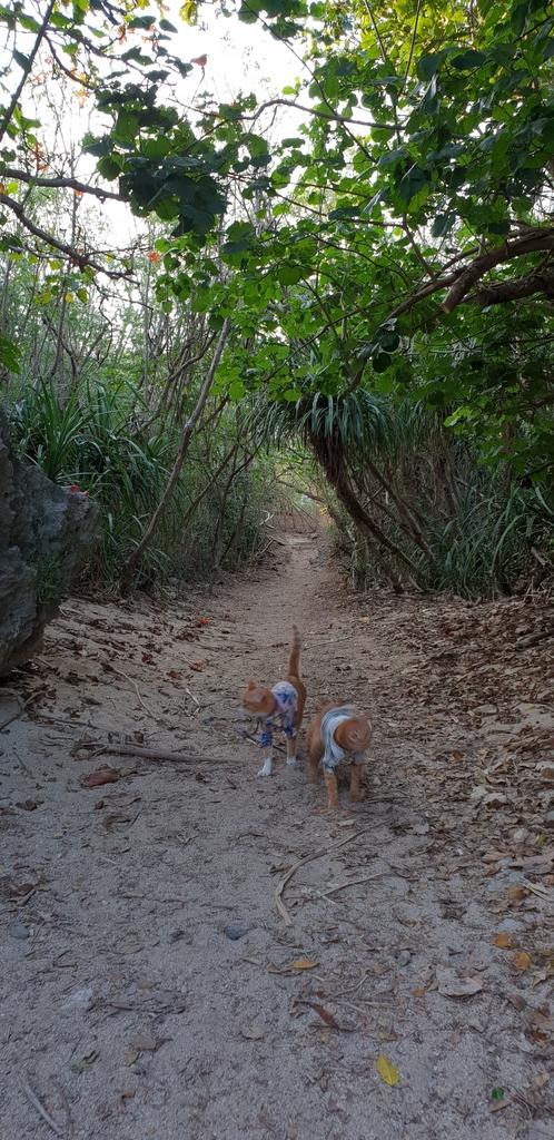 241303.jpg - 【屏東.恆春】小峇里島岩。記得帶肉泥。可以享受被貓咪包圍的感覺。這裡夕陽超美麗