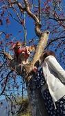【南投.信義】1月季節限定美景。外坪頂蔡家秘境梅園。絕美水池倒影:128175.jpg