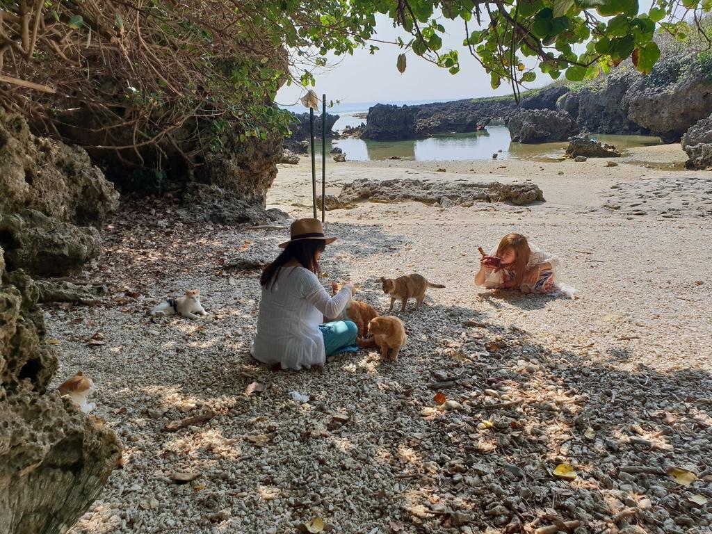 241267.jpg - 【屏東.恆春】小峇里島岩。記得帶肉泥。可以享受被貓咪包圍的感覺。這裡夕陽超美麗