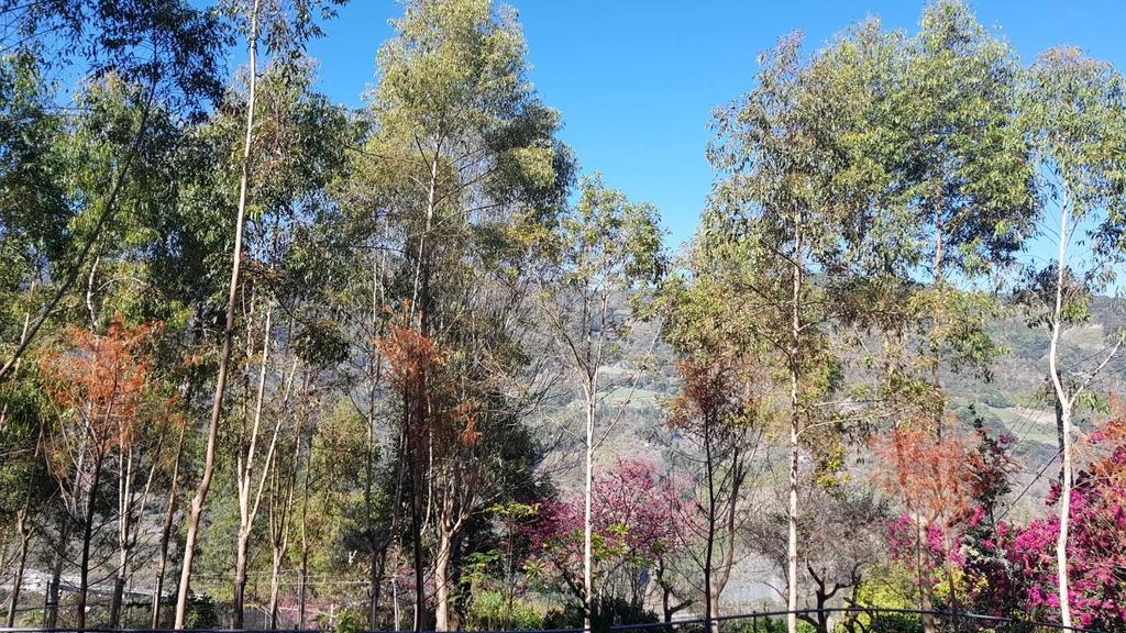 128182.jpg - 【南投.信義】1月季節限定美景。外坪頂蔡家秘境梅園。絕美水池倒影