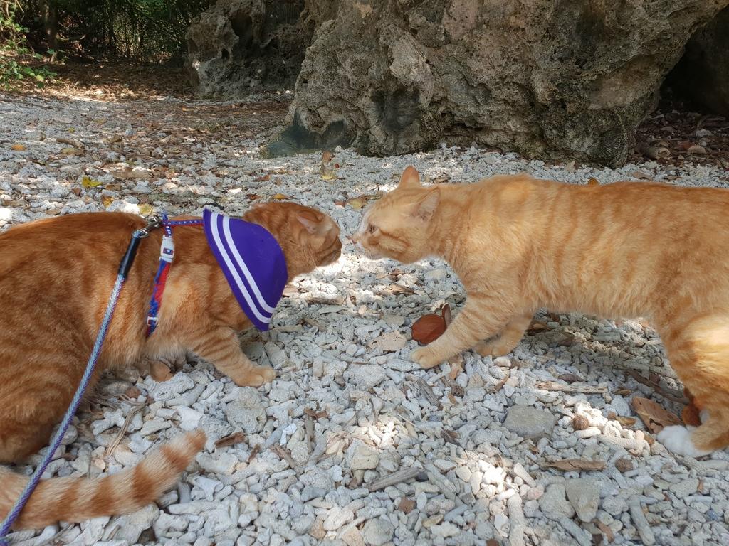 241274.jpg - 【屏東.恆春】小峇里島岩。記得帶肉泥。可以享受被貓咪包圍的感覺。這裡夕陽超美麗