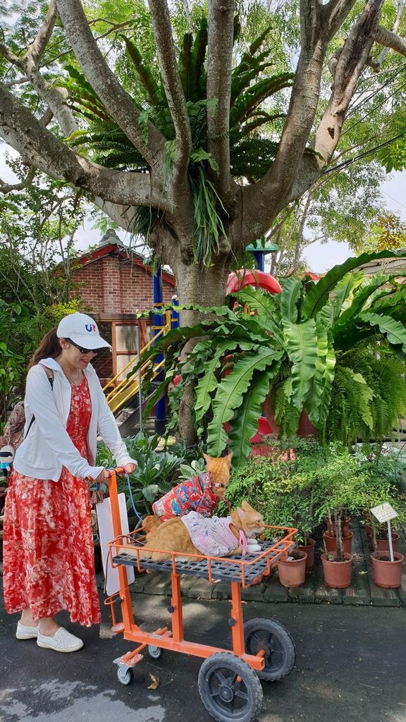 145576.jpg - 【彰化.田尾】鳳凰花園&窄巷咖啡。田尾最美麗花園植物種類超多推薦。低消100水果免費吃