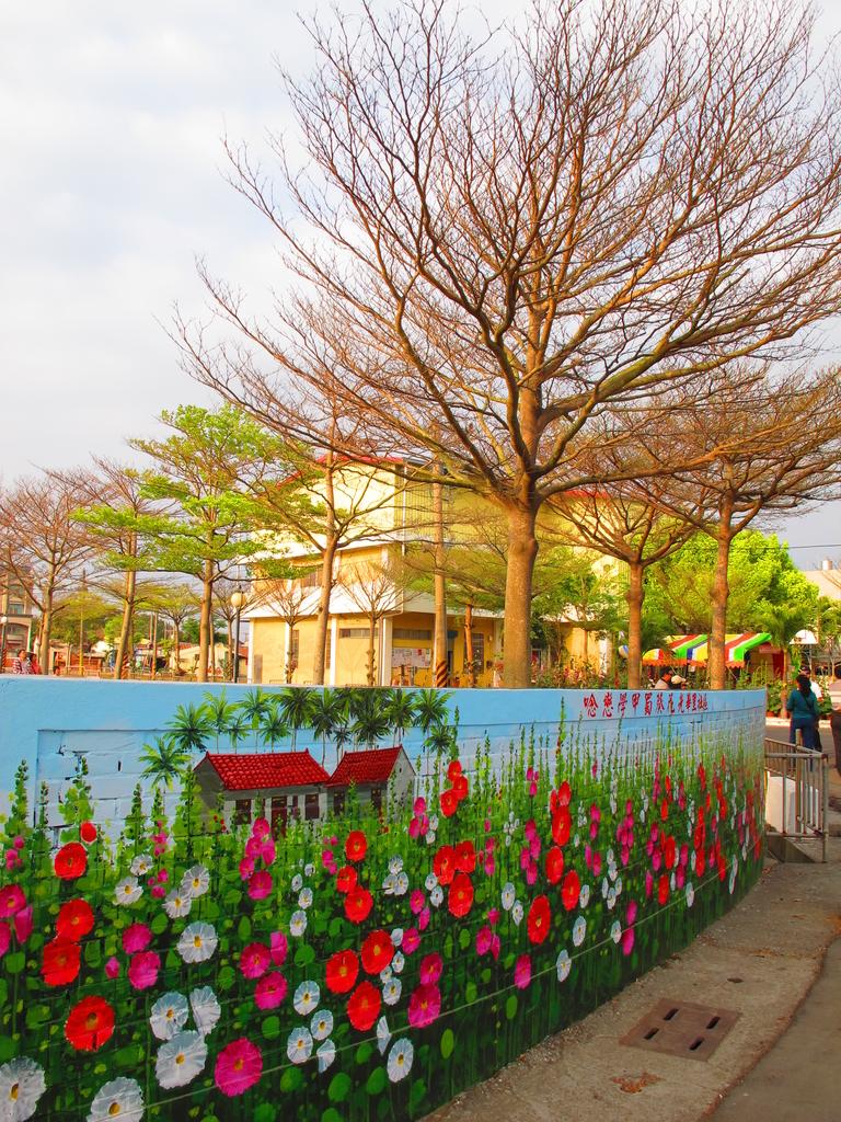 【台南】學甲蜀葵花盛開。季節限定版美麗花景:IMG_9634.JPG