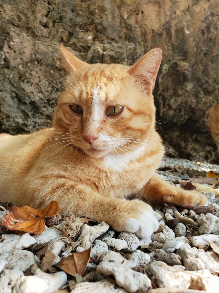 241263.jpg - 【屏東.恆春】小峇里島岩。記得帶肉泥。可以享受被貓咪包圍的感覺。這裡夕陽超美麗