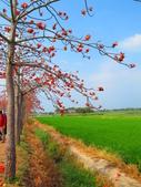 【台南】林初埤。季節限定美麗的木棉花道:IMG_9462.JPG