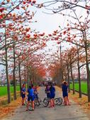 【台南】林初埤。季節限定美麗的木棉花道:IMG_9507.JPG