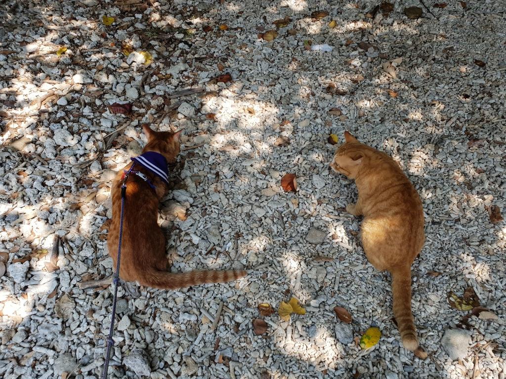 241275.jpg - 【屏東.恆春】小峇里島岩。記得帶肉泥。可以享受被貓咪包圍的感覺。這裡夕陽超美麗