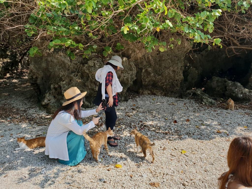 241278.jpg - 【屏東.恆春】小峇里島岩。記得帶肉泥。可以享受被貓咪包圍的感覺。這裡夕陽超美麗