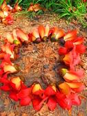 【台南】林初埤。季節限定美麗的木棉花道:IMG_9384.JPG