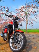 【台南】林初埤。季節限定美麗的木棉花道:IMG_9479.JPG