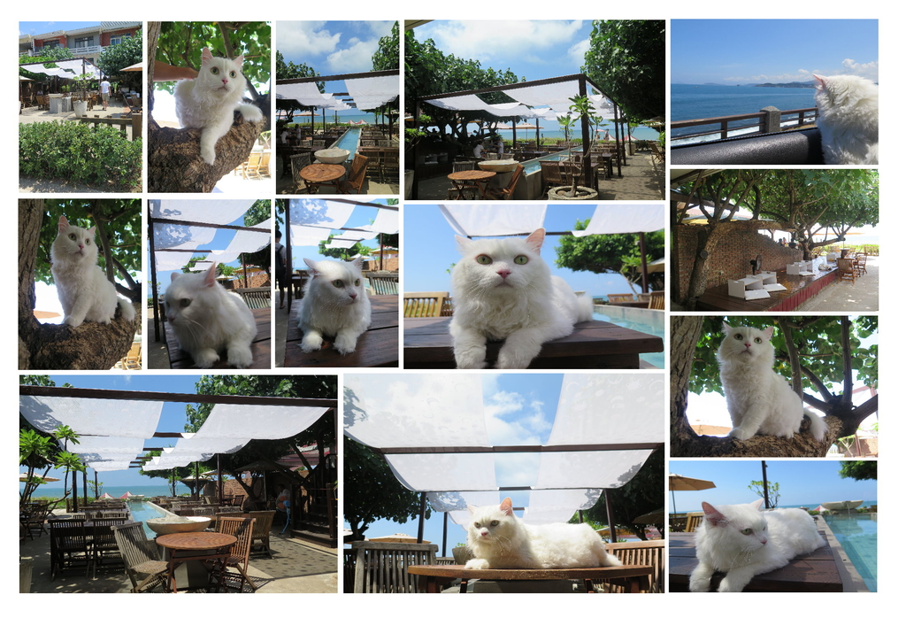 三芝咖啡館.jpg - 【台北】北海岸海景餐廳推薦。Villa sugar 義大利麵.咖啡.冰沙.鬆餅